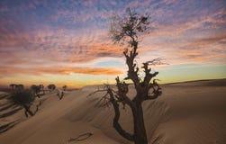 большие ландшафты штольни пустыни города безжизненные больше моей другой работы изменения вала захода солнца панорамы предыдущей Стоковые Изображения RF