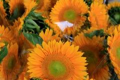 Большие букеты красивых солнцецветов обернутых в пластмассе ` s флориста Стоковое фото RF
