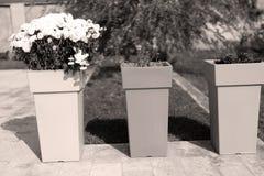 Большие вазы Стоковые Изображения