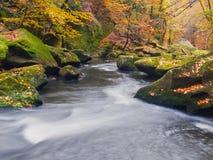 Большие валуны с упаденными листьями Речные берега горы осени Гравий и свежие зеленые мшистые валуны на банках с красочными листь стоковые изображения rf