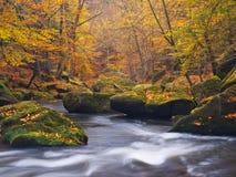 Большие валуны с упаденными листьями Речные берега горы осени Гравий и свежие зеленые мшистые валуны на банках с красочными листь стоковые изображения