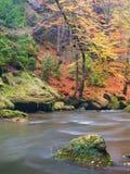 Большие валуны с упаденными листьями Речные берега горы осени Гравий и свежие зеленые мшистые валуны на банках с красочными листь стоковые фотографии rf