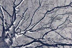 Большие ветви дерева над голубым небом Стоковое Изображение RF