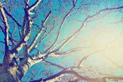 Большие ветви дерева над голубым небом Стоковые Фотографии RF