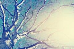 Большие ветви дерева над голубым небом Стоковые Изображения RF