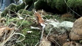 Большие грибы видеоматериал