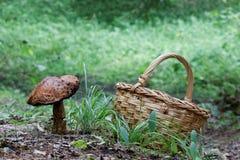 Большие гриб и корзина гриба Стоковая Фотография RF