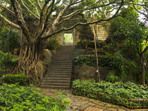 Большие дерево и древняя стена Стоковое Изображение RF