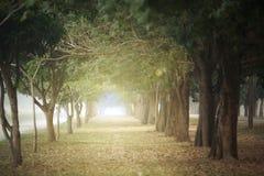 Большие деревья на обеих сторонах Стоковые Изображения