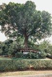 Большие деревья на павильоне сада в садах ` s Perdana Куалаа-Лумпур ботанических в Jalan Tembusu, Малайзии Стоковая Фотография RF