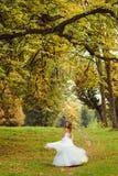 Большие зеленые ветви висят над невестой завихряясь на холме Стоковые Фото