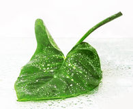 большие зеленые листья Стоковое Изображение RF