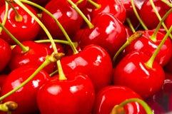 большие зрелые красные вишни Стоковая Фотография