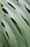 Большие листья Стоковые Фото