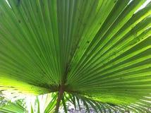 большие листья стоковое фото