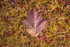 Большие лист на естественной предпосылке поля травы Стоковые Фото