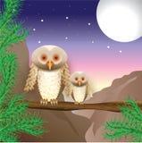 Большие и малые сычи всматриваются на расстоянии ночи Стоковое Изображение