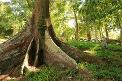 большие корни Стоковые Изображения RF