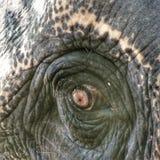 Большие малые глаза Стоковое фото RF