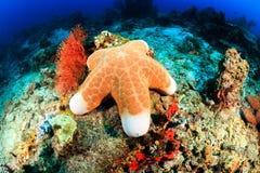 Большие морские звёзды на рифе Стоковое Изображение