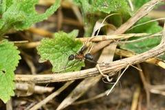 Большие муравей и anthill леса Стоковая Фотография