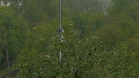 Большие падения дождя падают на деревья Сильный ветер сток-видео