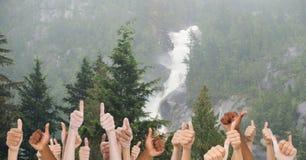 Большие пальцы руки поднимают деревья стоковая фотография rf