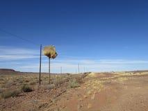 Большие птицы самые лучшие на телефоне знонят по телефону в пустыне с предпосылкой голубого неба Стоковое Изображение