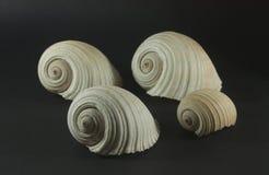 большие раковины моря Стоковые Фотографии RF