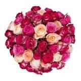 большие розы пука Стоковые Фото
