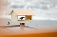 Большие синицы в birdhouse Стоковые Изображения RF