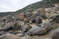 Большие утесы в визировании золоедин в национальном парке Torndirrup около Albany Стоковое фото RF