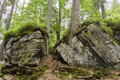 Большие утесы и лес на Arbersee, Германия стоковая фотография rf