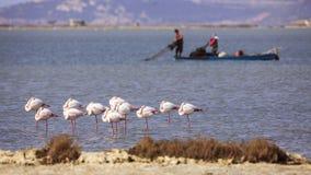 Большие фламинго и рыболовы Стоковые Фото