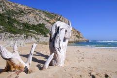 Большие части driftwood на пляже Стоковое Изображение