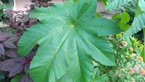 Большим листья высекаенные зеленым цветом стоковое изображение