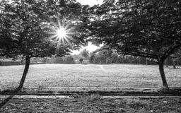 2 больших дерева в левом и правом, Стоковые Изображения RF