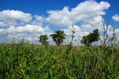 3 больших дерева на Grassfield Стоковая Фотография RF