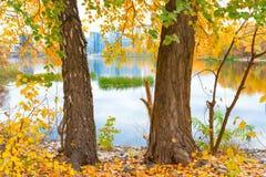 2 больших дерева приближают к голубому озеру Стоковое фото RF