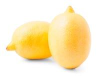 2 больших желтых лимона Стоковые Изображения