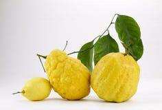 2 больших кедра Амальфи и один лимон Стоковые Фотографии RF