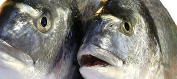 2 больших рыбы леща свеже уловленных Стоковое Изображение RF