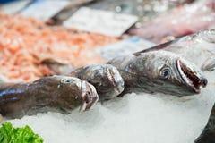 3 больших рыбы, который нужно продать Стоковые Фотографии RF