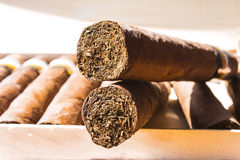 2 больших сигары в хьюмидоре Стоковые Фотографии RF