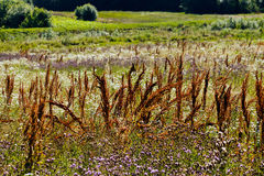 01 08 2011 большого группы поля сделала нидерландскими заводами изображения малое zelhem Стоковые Изображения RF