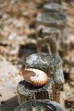 Большое великобританское лето Pebble Beach с раковиной моря Стоковое Фото