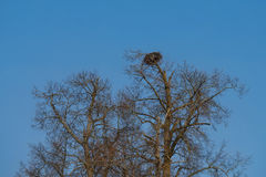 Большое гнездо в котором птица живет стоковое изображение rf