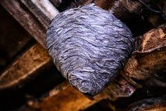 Большое гнездо оси в чердаке конца загородного дома вверх Стоковые Фото