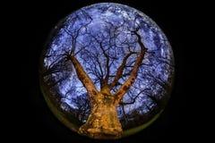 Большое дерево - взгляд fisheye Стоковая Фотография