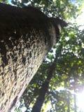 Большое дерево в джунглях Стоковая Фотография RF